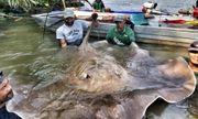 Cá lại chết hàng loạt trên sông Âm tại tỉnh Thanh Hóa