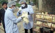 Sau Quảng Ninh, tiếp đến Đắk Nông xuất hiện ổ dịch cúm H5N1
