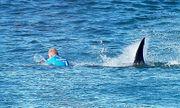 Bị cá mập tấn công, chàng trai đẩy bạn gái xuống biển rồi bơi đi và bài học sâu sắc