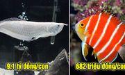 """Những loài cá có giá tiền tỷ khiến không ít người phải """"ngã ngửa"""""""