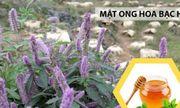 Hà Giang: Nâng cao năng suất, chất lượng của mật ong bạc hà