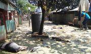 Nhân chứng vụ rò rỉ khí amoniac ở TP. HCM: Người chảy máu, chó gà chết la liệt