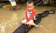 Vụ bé trai 3 tuổi cưỡi trăn 50 kg ở Thanh Hóa: Xử phạt gia đình nuôi trăn