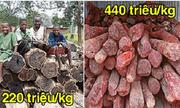 Những cây gỗ tươi quý hiếm bậc nhất thế giới, có giá