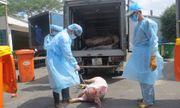 Vụ 4.000 con heo bị tiêm thuốc an thần: Kỷ luật 23 cán bộ