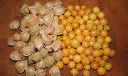 Loại rau dại ở Việt Nam lại được bán được