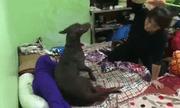 Clip: Thích thú với cảnh chú chó xông vào chịu đòn thay, bênh bé gái bị mẹ đánh