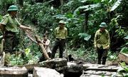Khởi tố, bắt tạm giam 2 Trạm trưởng bảo vệ rừng