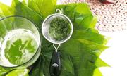 Chữa đau dạ dày bằng lá trầu không có hiệu quả?