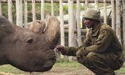 Tê giác trắng đực cuối cùng trên Trái Đất qua đời