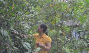 Bài thuốc thần kì chữa khỏi bệnh xương khớp của lương y núi rừng Ba Vì
