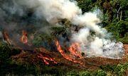 Thái Nguyên: 3 người thương vong do đốt thực bì trồng rừng