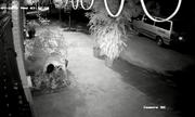 Video: 2 thanh niên đánh ô tô đi trộm... hoa hồng cổ