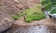 Tìm thấy thi thể nghi phượt thủ mất tích 8 ngày ở Tà Năng- Phan Dũng
