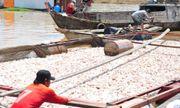 Vụ 1.500 tấn cá chết ở Đồng Nai: Xác định nguyên nhân ban đầu