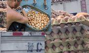 Dân mạng xôn xao clip trứng gà nở ngay trên xe tải vì trời quá nóng