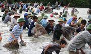 Hà Tĩnh: Nhộn nhịp cảnh cả trăm người lao xuống đầm bắt cá cầu may