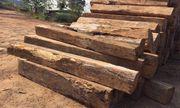 Nghi vấn nam thanh niên chở gỗ trái phép bị... gỗ đè chết