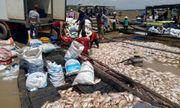 1.500 tấn cá chết trên sông La Ngà ở Đồng Nai do thiên tai