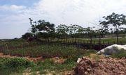 """Khu đô thị AIC Mê Linh: """"Siêu dự án"""" sau 10 năm vẫn là… cánh đồng"""