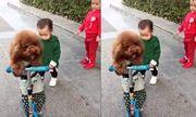 Video: Em bé mếu máo vì bị chú chó cướp mất xe scooter