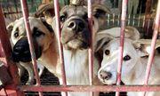 Hàn Quốc: Tòa án tuyên bố giết hại chó mèo lấy thịt là bất hợp pháp