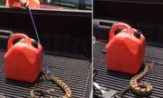 Video: Bị mất đầu, rắn đuôi chuông vẫn phóng lên tấn công con người