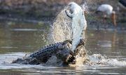 Video: Rùng mình cá sấu