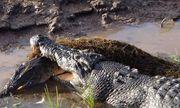 Video: Cá sấu