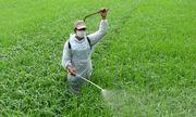 Phun thuốc diệt cỏ không mang khẩu trang, người đàn ông bị ngộ độc nặng