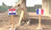 """Dự đoán chung kết World cup 2018 Pháp – Croatia gây sốc của các """"nhà tiên tri"""""""