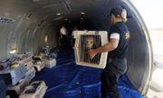 Máy bay Nga hạ cánh khẩn cấp vì...chó xổng chuồng
