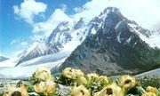 Hoa sen tuyết được rao bán 100 triệu/kg có gì đặc biệt mà nhiều người ráo riết săn lùng?