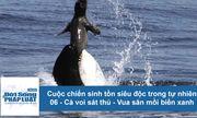 Cuộc chiến sinh tồn: Cá voi sát thủ - vua săn mồi trong lòng biển xanh