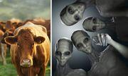 Lạ: Người ngoài hành tinh bị nghi ra tay sát hại đàn bò ở Argentina