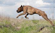Clip thế giới động vật: Khả năng phi thường của những chú chó nhà