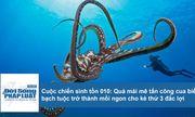 Cuộc chiến sinh tồn: Mải mê tấn công cua biển, bạch tuộc thành mồi ngon cho kẻ thứ 3
