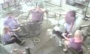 Video: Xoa đầu chó lạ, cựu người mẫu bất ngờ bị cắn thẳng vào mặt