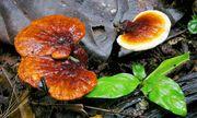 Những loại nấm, rong biển hỗ trợ điều trị ung thư hiệu quả