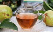 Những lợi ích thần kỳ đối với sức khỏe khi uống nước lá ổi mỗi ngày