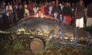 Video: Cận cảnh bắt con cá sấu lớn nhất thế giới ở Philippines nặng 1 tấn