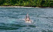 Video: Xót xa hình ảnh cá voi mất nửa người bơi lội giữa biển khơi