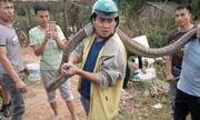 Video: Rùng mình cảnh tay không bắt rắn hổ mang dài 4m