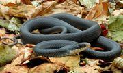 Video: Những loài rắn độc nhất hành tinh, đoạt mạng chỉ với một nhát cắn