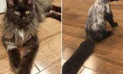Trấn Thành kêu trời vì Hari Won cạo sạch lông mèo cưng 3.000 USD