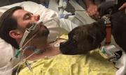 Video: Khoảnh khắc chia ly đầy cảm động của chú chó với người chủ đang hấp hối