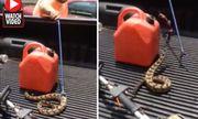 Video: Rắn mất đầu vẫn hung dữ tấn công người