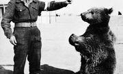 Chuyện về Wojtek, chú gấu chiến binh chiến đấu với Đức Quốc xã trong Thế chiến thứ II