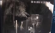Video: Lạc đà mẹ dũng cảm cứu con từ miệng báo hung dữ