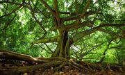 Người đàn ông mất tích 37 năm được tìm thấy nhờ cây mọc từ dạ dày